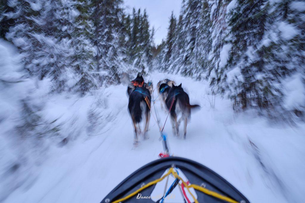 Alaska Husky Sled